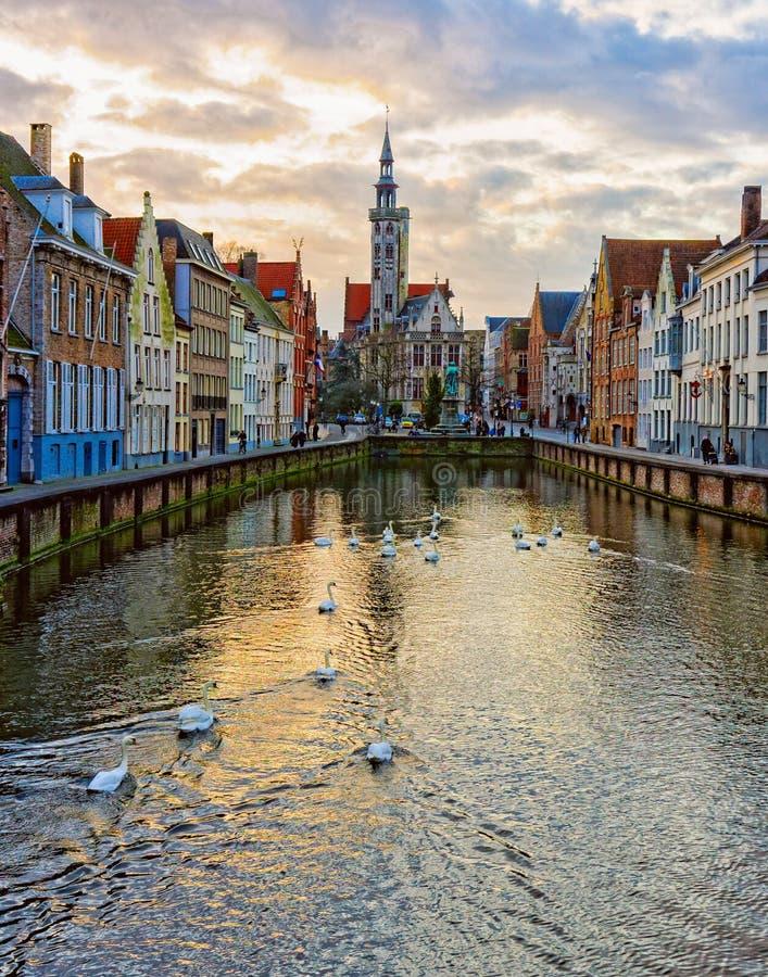 Svanar på kanaler av Bruges, Belgien arkivbilder