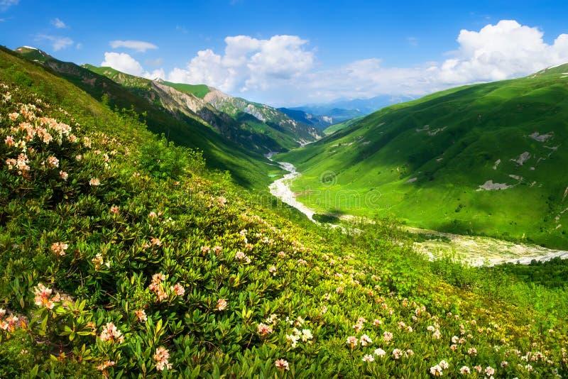 Svaneti, Ge?rgia Montanhas verdes Paisagem da montanha do verão no dia claro Montes brilhantes com grama verde e o céu azul Monta imagens de stock