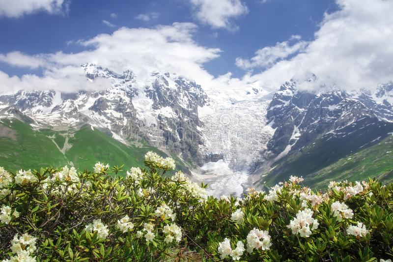 Svaneti nature landscape on summer day with blue sky and white flowers. Snowy peaks of rocky mountains royalty free stock photo