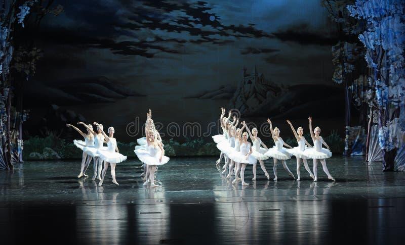 Svanfamilj-balett svan sjön royaltyfria foton