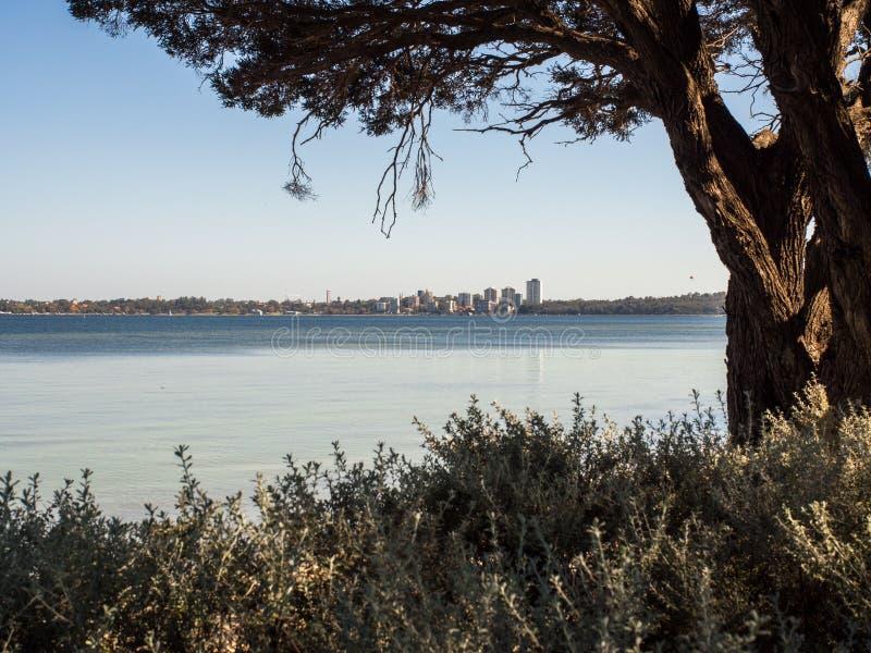 Svanflod från den Como strandremsan, Perth, västra Australien arkivfoto