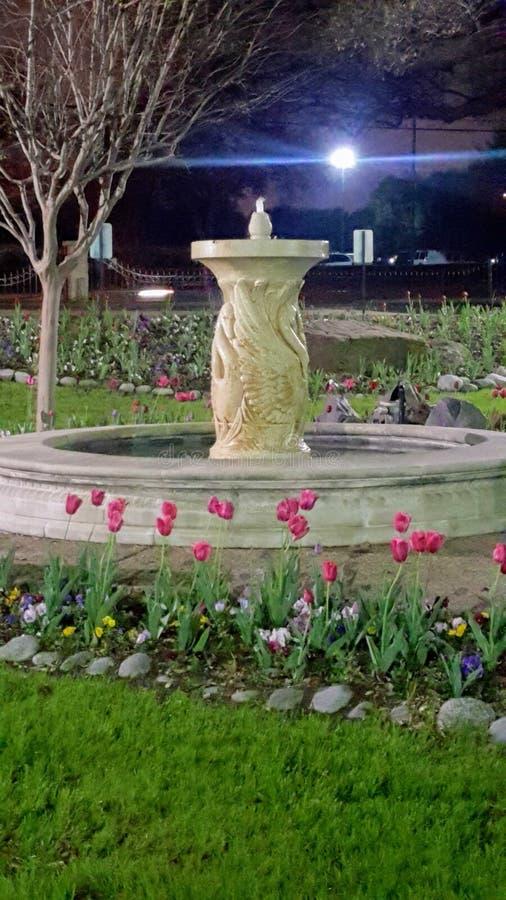 Svanspringbrunn i tulpanträdgård royaltyfri bild