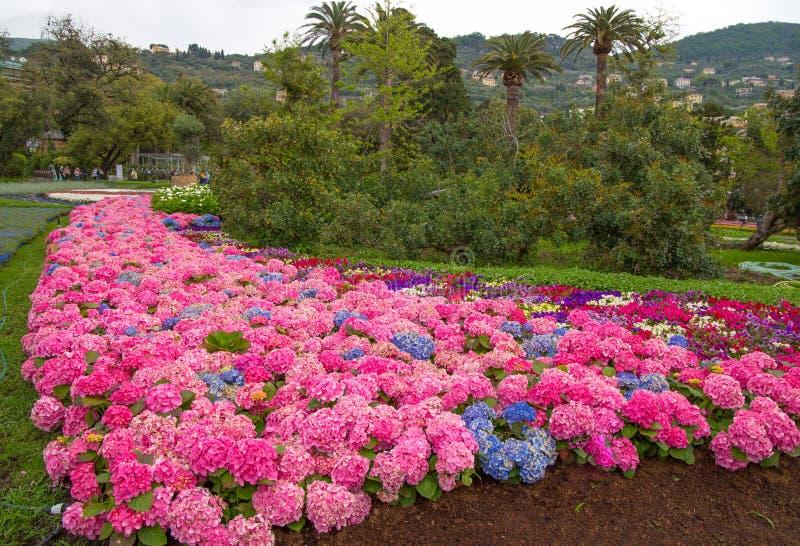 Svariated и красочная форма гортензии в парке стоковая фотография rf