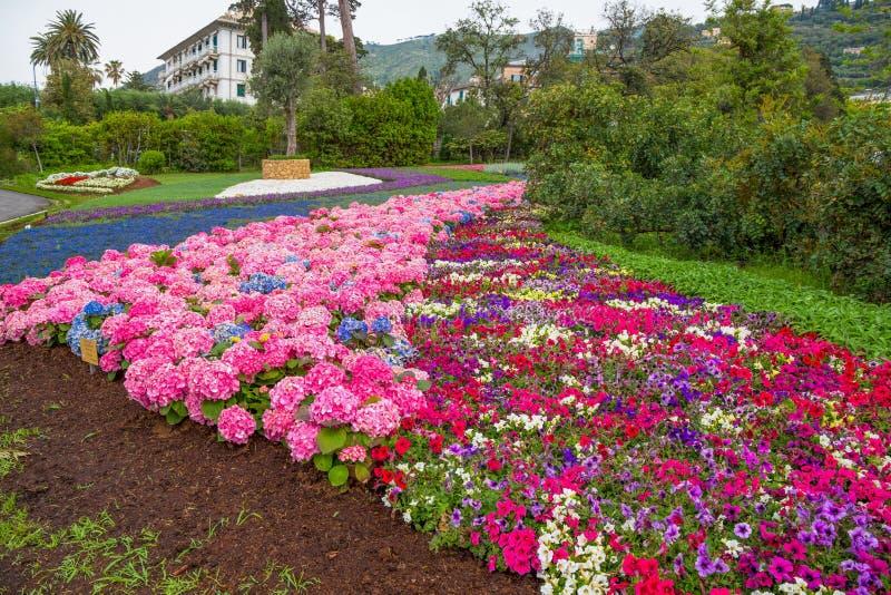 Svariated och färgrik form av vanliga hortensian i parkera royaltyfri foto