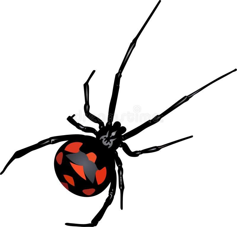 Svart änka för spindel fotografering för bildbyråer