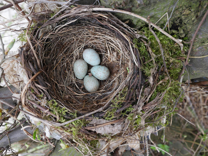 Svart fågelrede med ägget arkivfoto