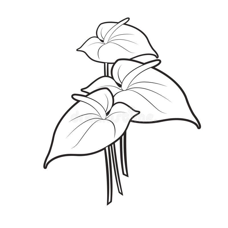 Svart för Anthuriumblommor för översikt tre teckning för vektor royaltyfri illustrationer