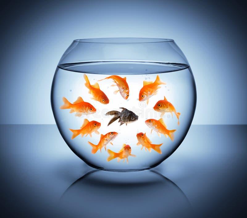 Svart fisk royaltyfri fotografi