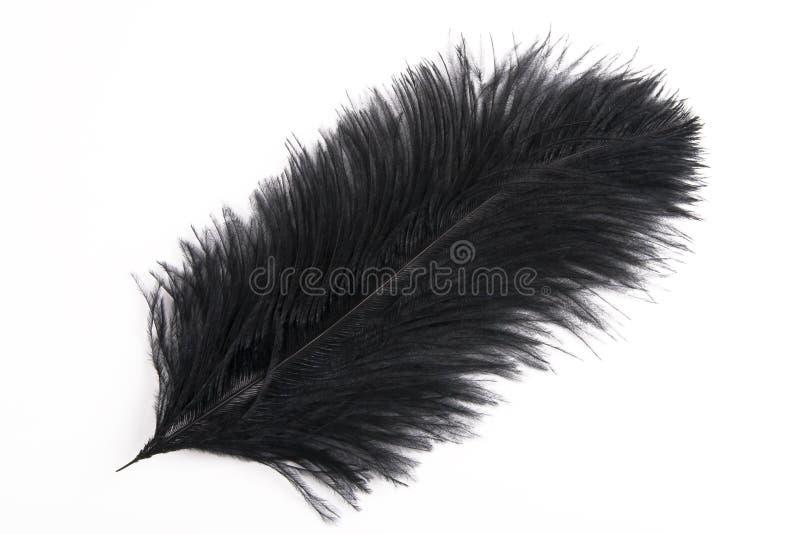svart fjäder arkivbilder