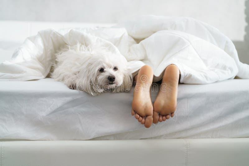 Svart flicka som sover i säng med hunden och visar fot arkivfoto