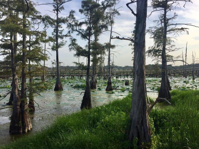 Svart flodarm i Monroe, Louisiana arkivfoton