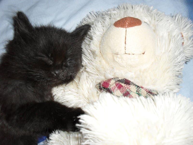 Svart fluffig kattunge som sover med en vit nallebjörn Cat Sleep royaltyfria foton
