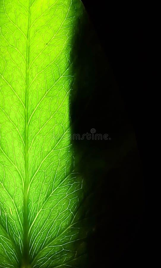 svart gr?n leaf f?r bakgrund royaltyfri foto