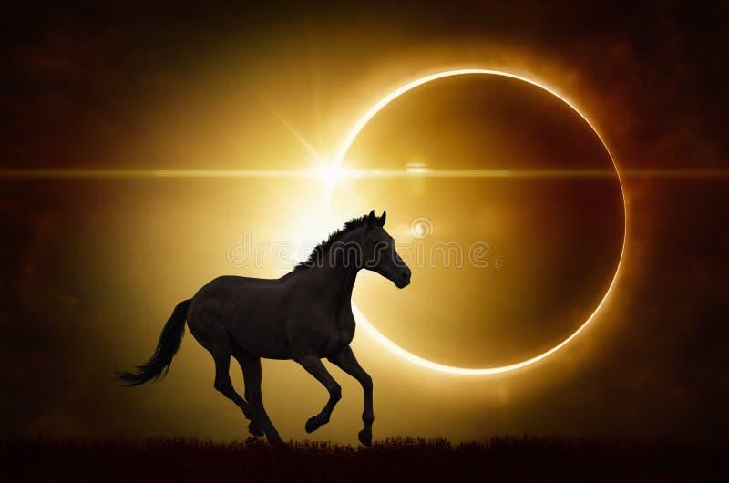 Svart häst på sammanlagd bakgrund för sol- förmörkelse royaltyfria bilder