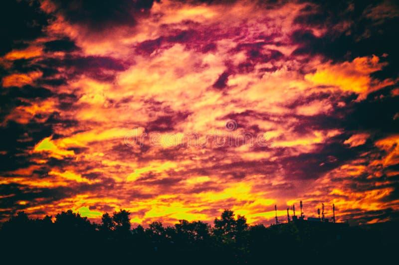 Svart halloween för träd för siluette för solnedgångmoln röd orange arkivfoto