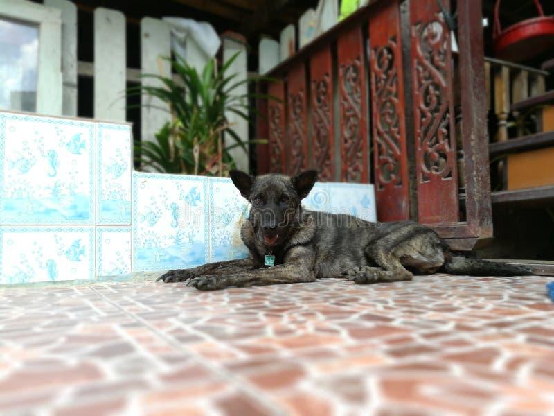 svart hund arkivfoton