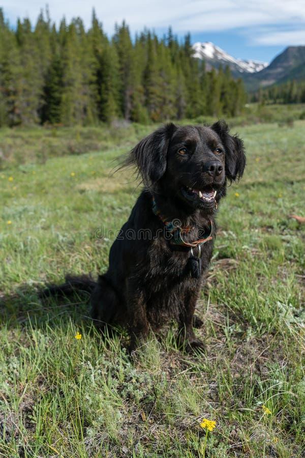 Svart hund i Colorado royaltyfri foto