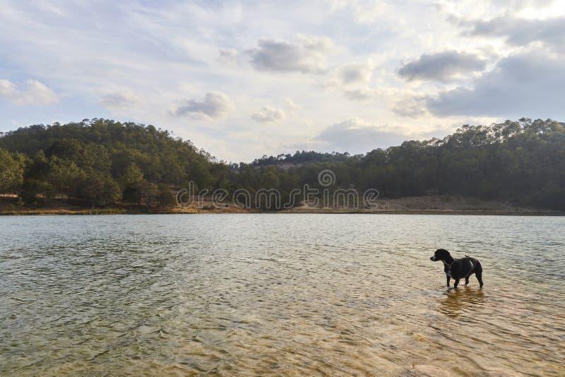 Svart hund på kusten av en sjö arkivfoto