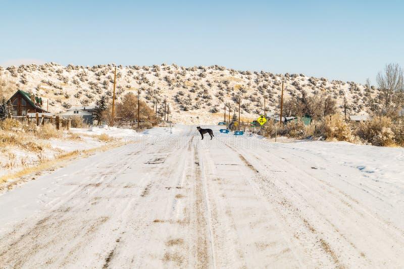 Svart hund på vägen i en vinterdag i Manila, Utah arkivfoton