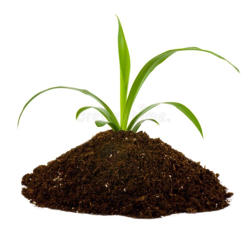 svart jordgreenväxt royaltyfri bild