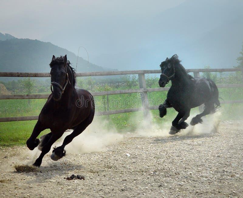 svart köra för hästar arkivbilder