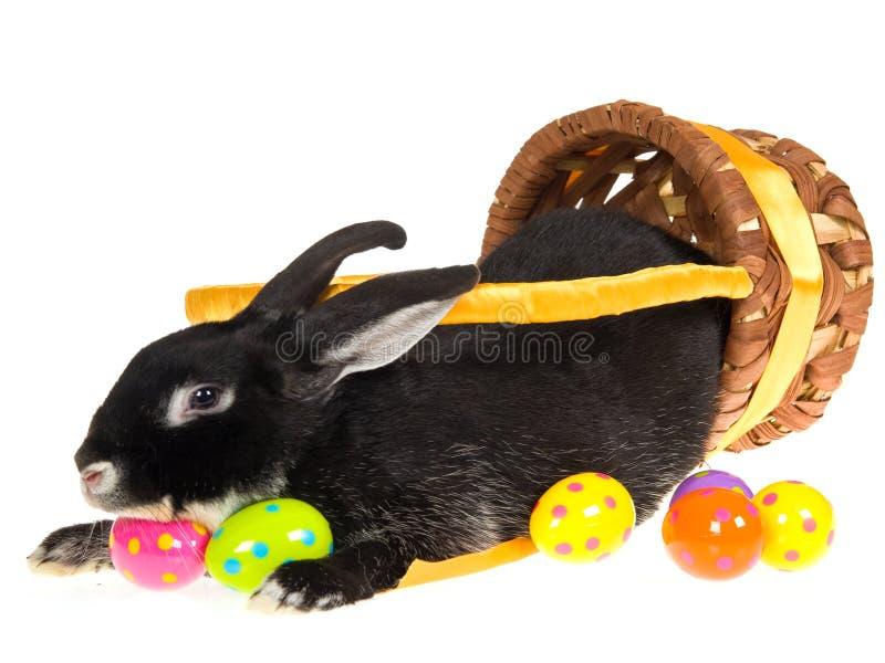 svart kanin easter för korg inom arkivfoton