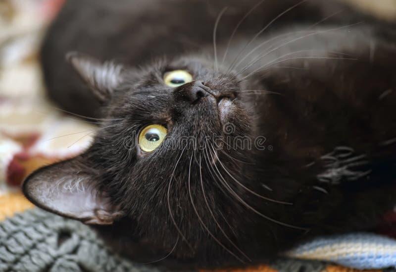 Download Svart katt arkivfoto. Bild av päls, huvud, utgångspunkt - 27287542