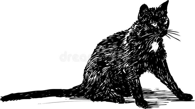 Svart katt vektor illustrationer