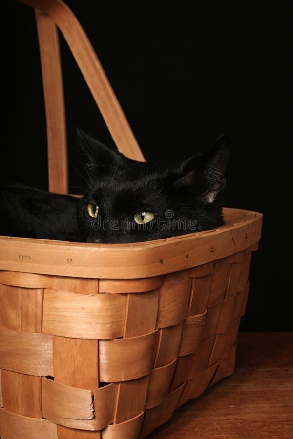 svart katt för korg royaltyfri fotografi