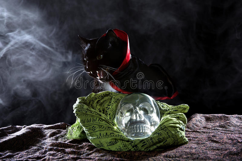 Svart katt med en Crystal Skull arkivbilder