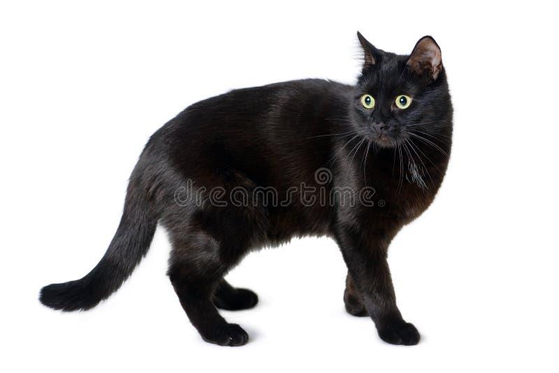 Svart katt med en förskräckt blick på vit royaltyfria bilder