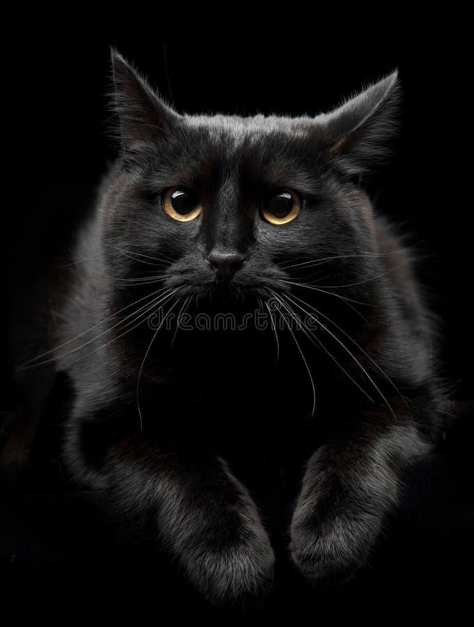 Svart katt med gula ögon royaltyfri foto