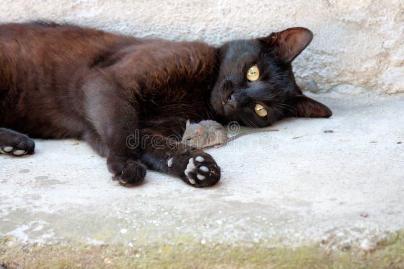 Svart katt och mus i en jägare - rovförhållande arkivbild