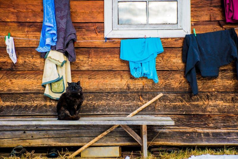 Svart katt på bänken nära byhuset royaltyfri fotografi