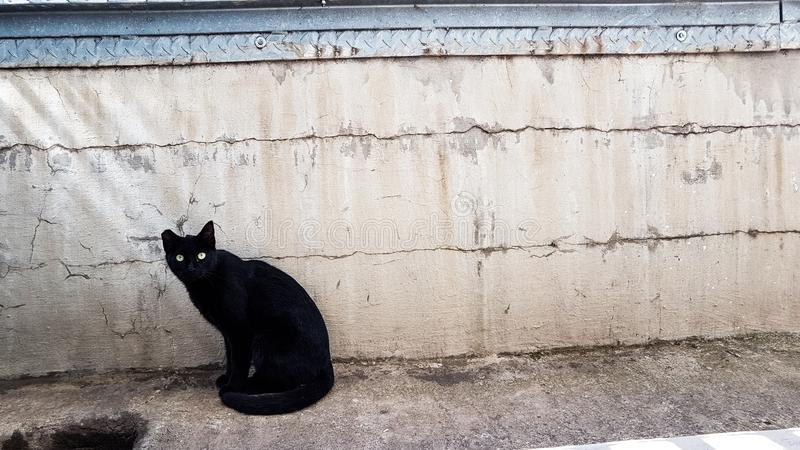 Svart katt som ser in i kameran royaltyfri bild