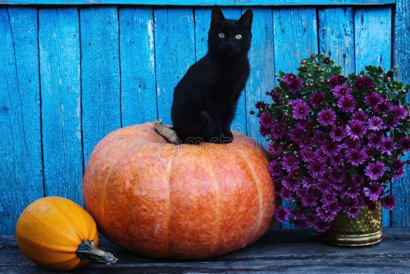 Svart katt som sitter på en pumpa arkivfoto