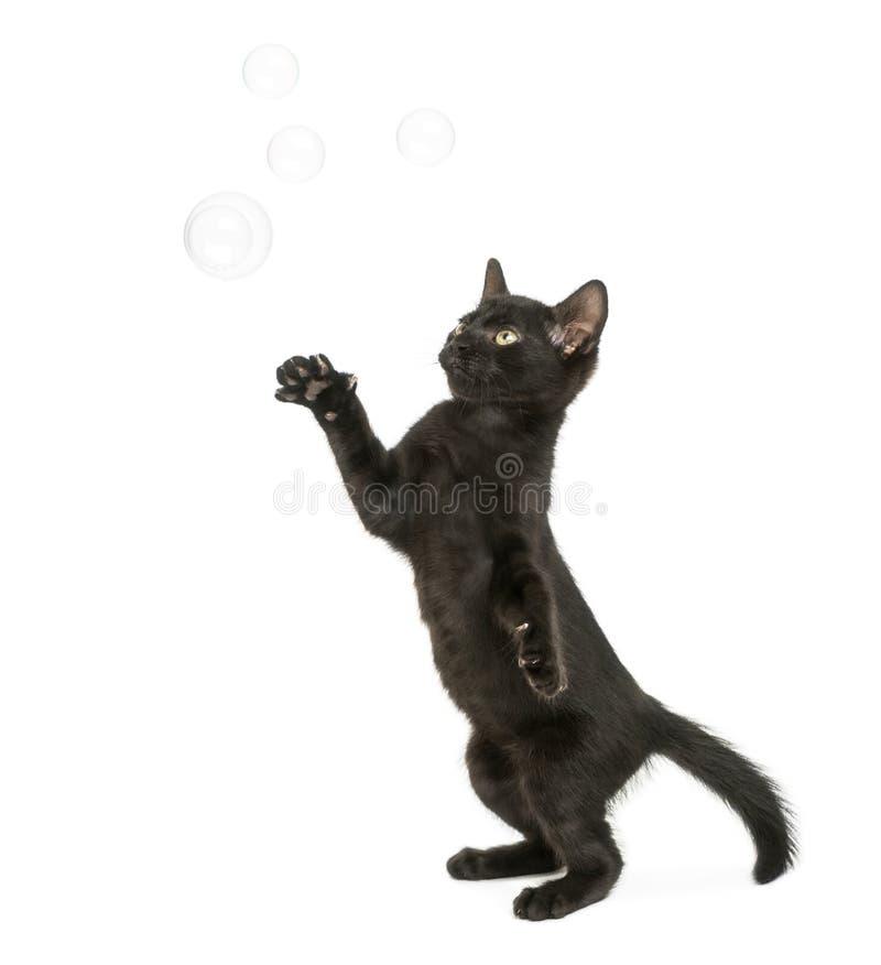 Svart kattungeanseende på bakre ben som når på såpbubblor arkivbild