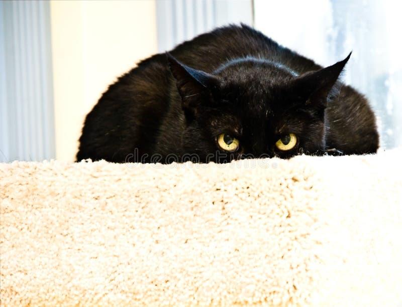 svart kattuttryck royaltyfria foton