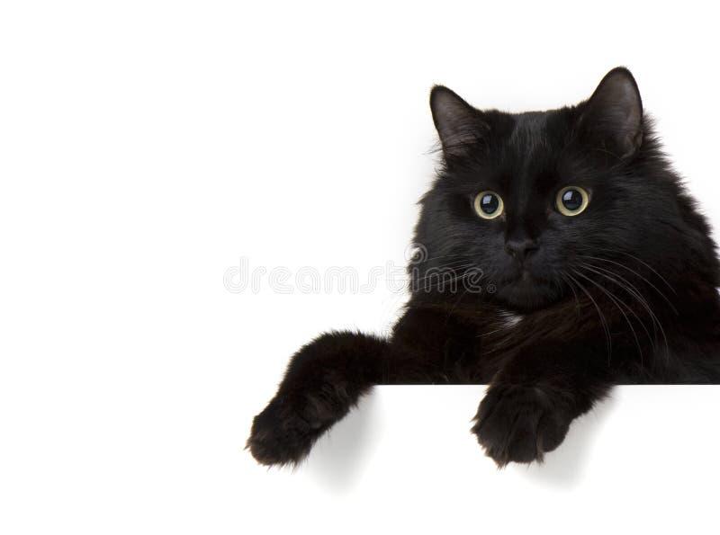 svart kattwhite för bakgrund arkivfoton