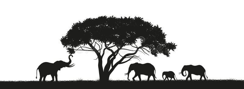 Svart kontur av elefanter i savannah africa djur afrikansk liggande Panorama av den lösa naturen royaltyfri illustrationer