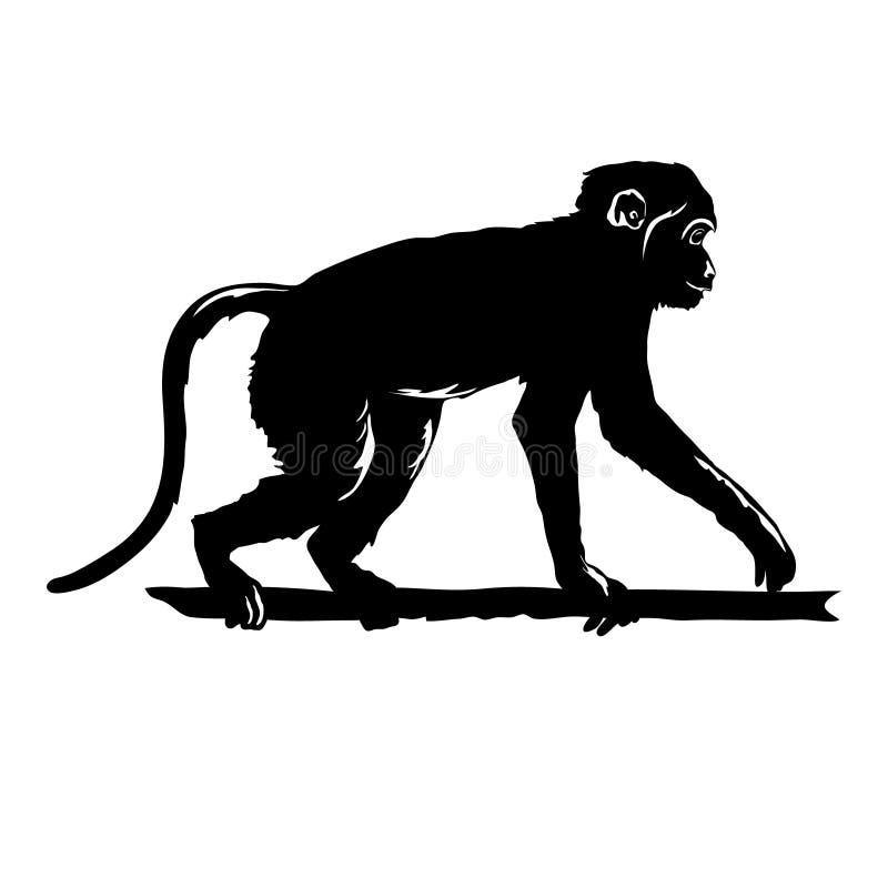 Svart kontur för apa på vit bakgrund Räcka den utdragna konturn av den roliga djura schimpansen som går pinnen Ny kines stock illustrationer