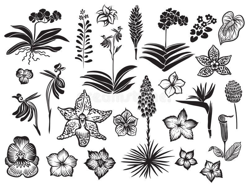 Svart kontur för exotiska och tropiska blommor som isoleras på vit bakgrund Hand dragen vektorblomning vektor illustrationer