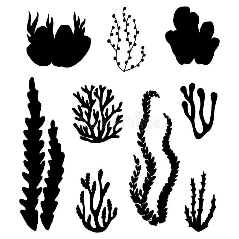 Svart kontur för havsväxt Isolerad vektoruppsättning vektor illustrationer