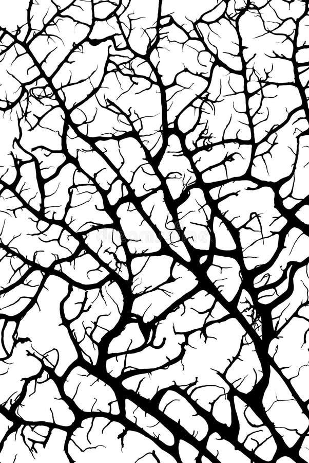 svart korallsilhouette royaltyfria foton