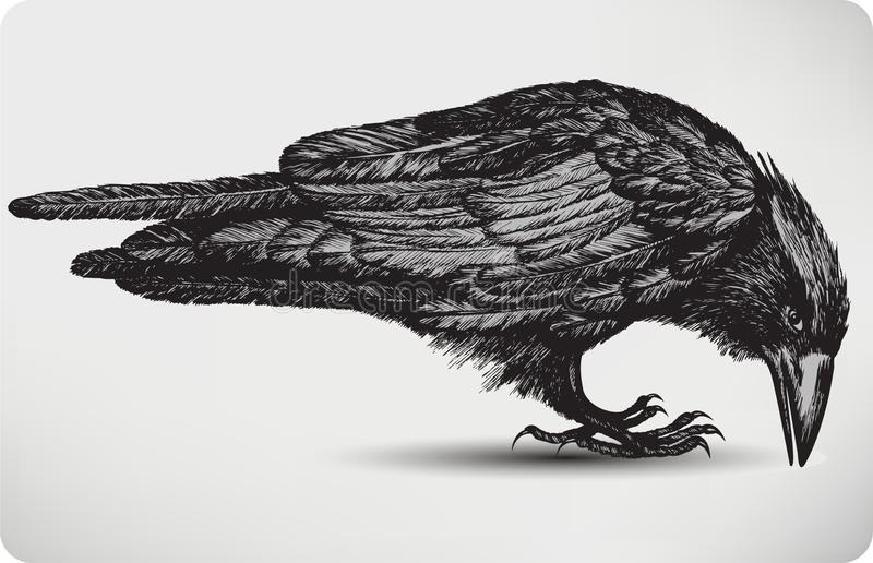 Svart korpsvart fågel, hand-teckning. Vektorillustratio royaltyfri illustrationer
