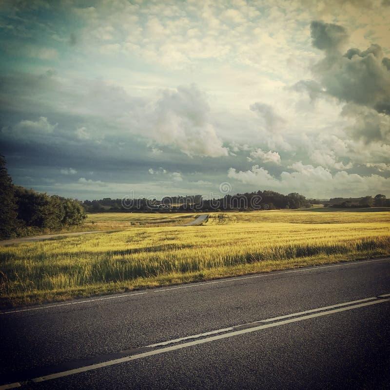 Svart landsväg med det gula fältet i bakgrunden arkivfoton