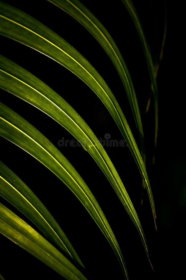 svart leaf för bakgrund royaltyfri foto