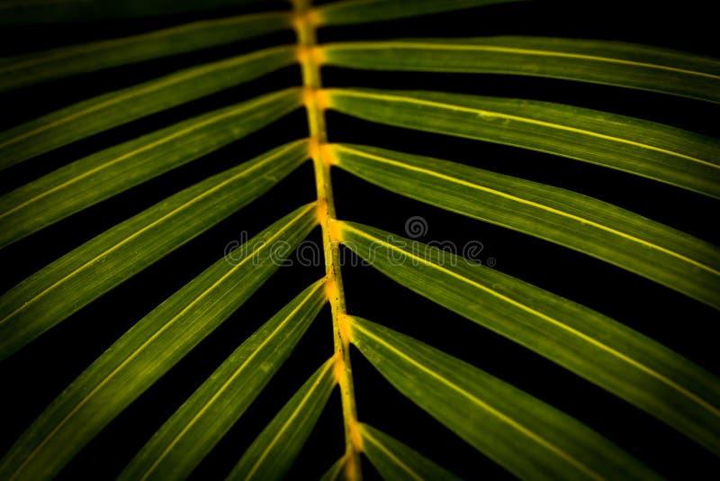 svart leaf för bakgrund arkivfoto