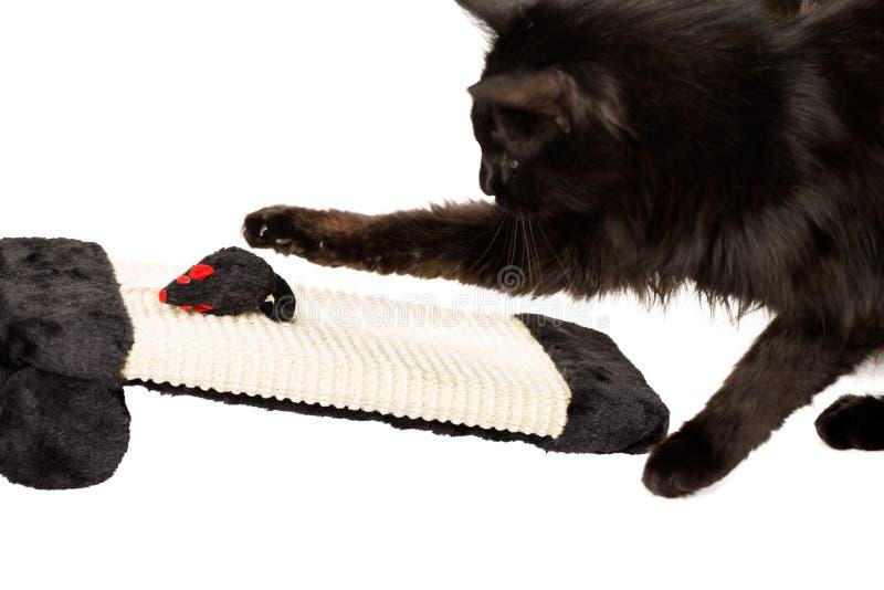svart leka för katt royaltyfria bilder
