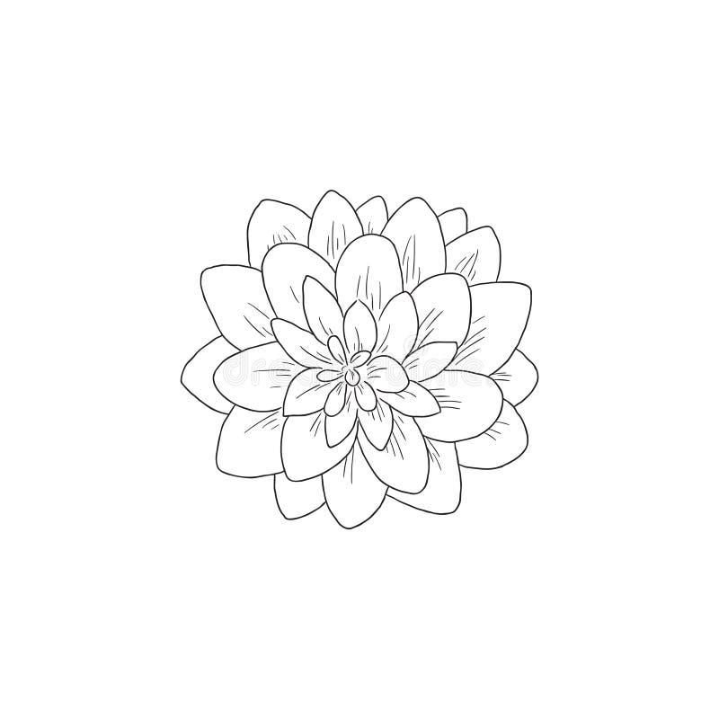 Svart linje Art Dahlia Flower Aster Vector Line royaltyfri illustrationer